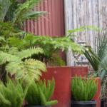 Urban Jungle: Flora Grubb